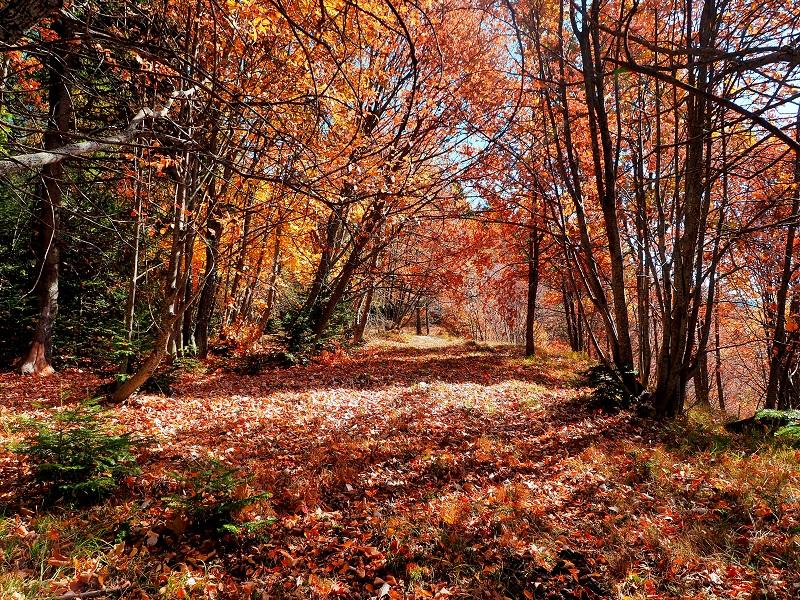 Foliage tra Mulattiere, Borghi e Ulivi