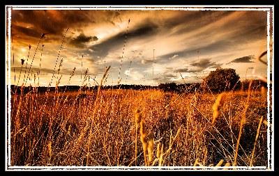 campi-di-grano.jpg