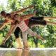 Mindfulness HealthwiseStudio 7